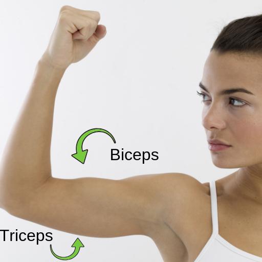 Triceps and Biceps