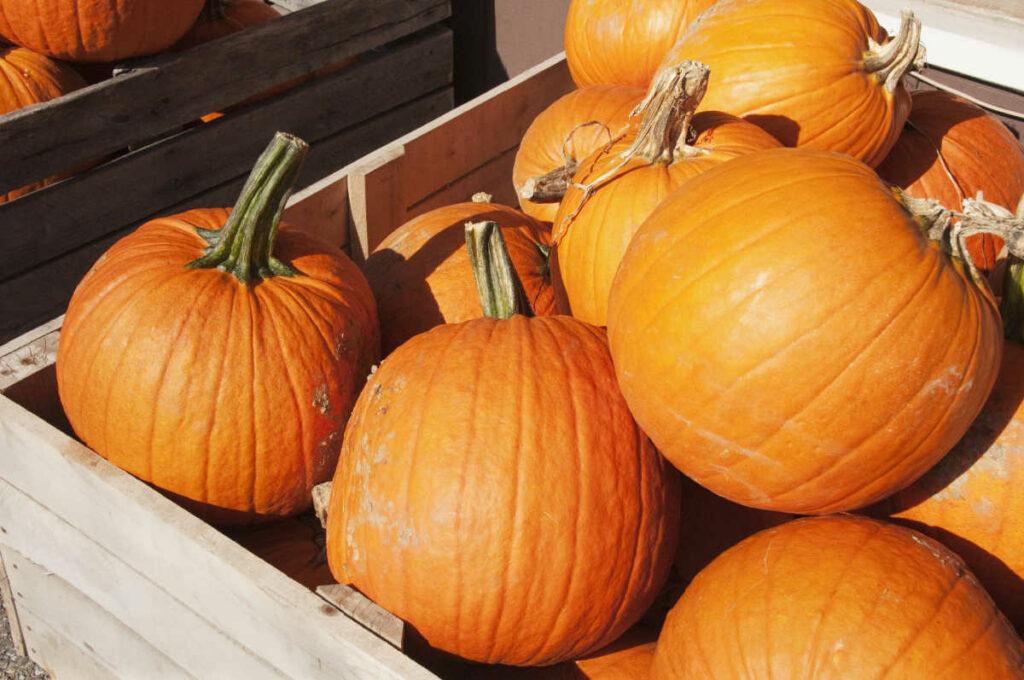 Is Pumpkin Keto-Friendly box of pumpins